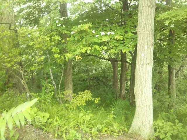 リビング、和室から見える林です。野鳥やリスが住んでいます。