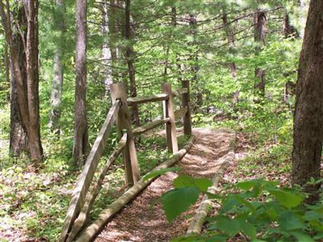 Path Leading Down to the Cabin