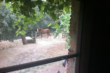 Window from your room you can watch te horses