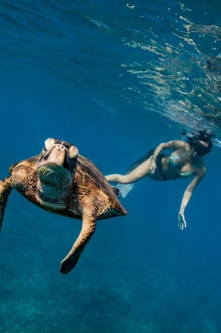 Encounter w/ Hawaiian Green Sea Turtle