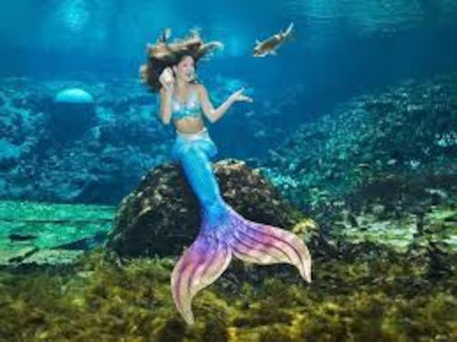 15 Minutes from Weeki Wachee State Park and The World Famous Mermaids