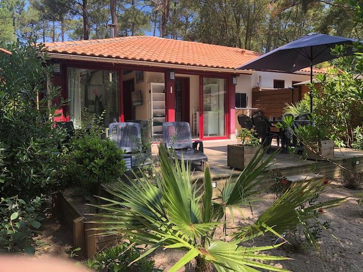 Maison dans la pinède, Vue sur la forêt Landaise