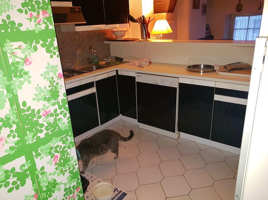 le chat de la maison, Grizouille, 10 kgs de câlins !