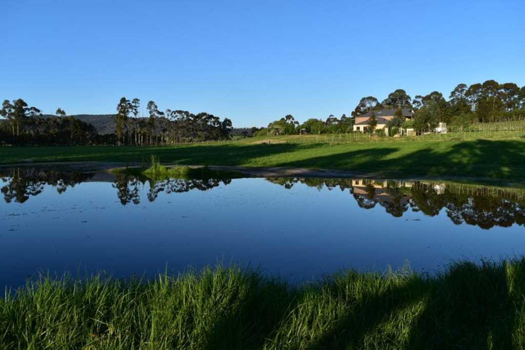 One of the two lakes in Gypsy Creek winery