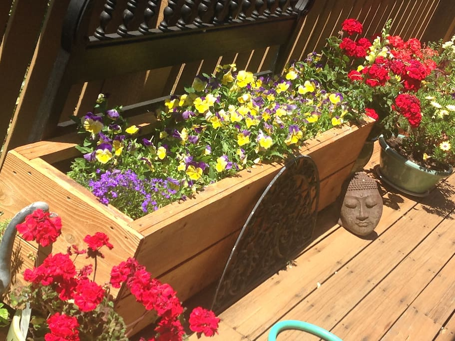 Some of the flowers on the deck in May...