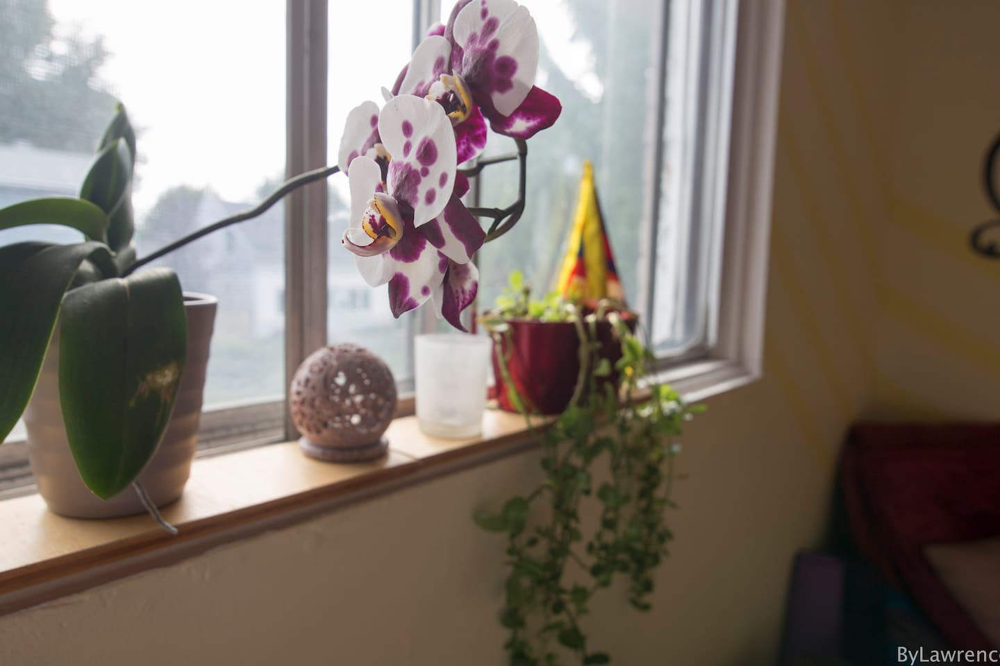 Plants will accompany you around the apartment