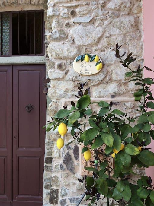 L'Aia dei Limoni