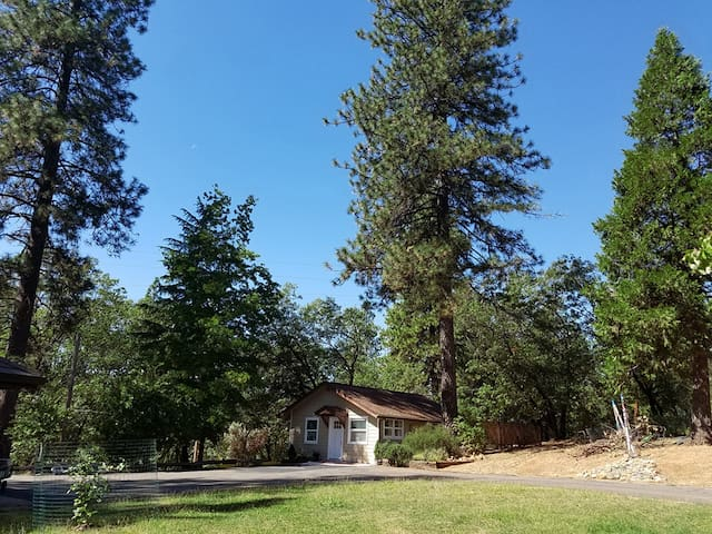 Cottage nestled in the Ponderosa Pines, Black Oaks and Cedar trees. Private parking in front.
