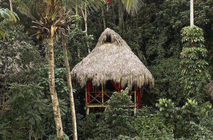 Tree Top Tree House