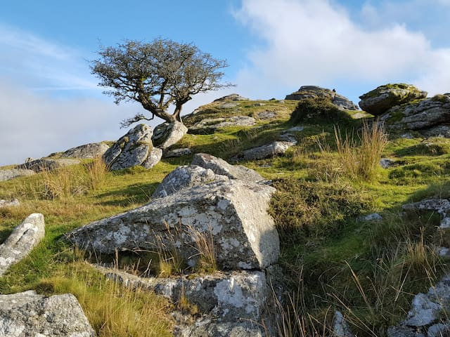 There are dozens of amazing walks on Dartmoor which is within a few minutes of Quither