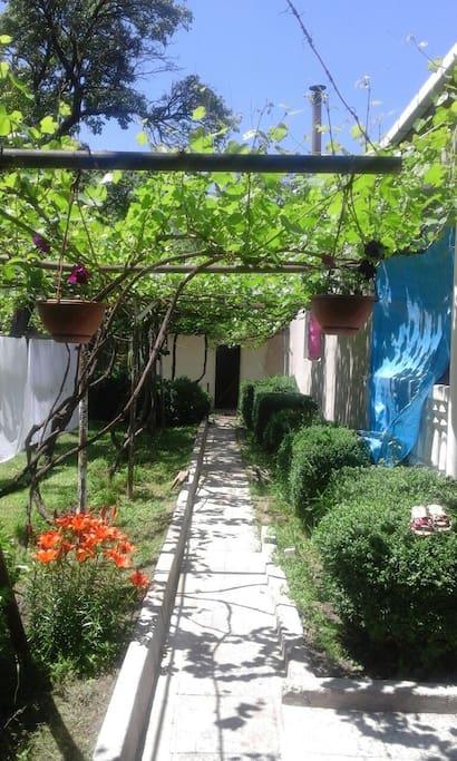 Garden and entry