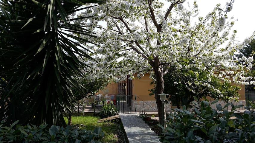 Grazioso e confortevole chalet - Provincia di Latina - Blockhütte