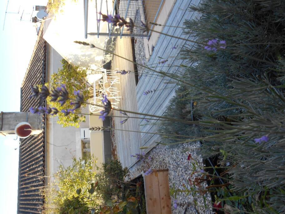 Les lavandes de la terrasse en soirée