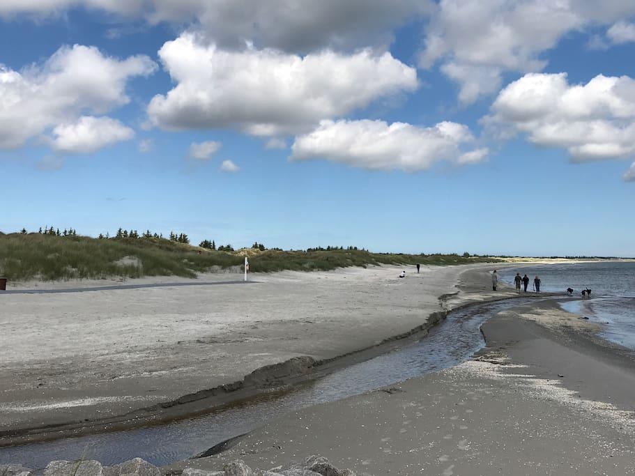 Stranden ved Ålbæk