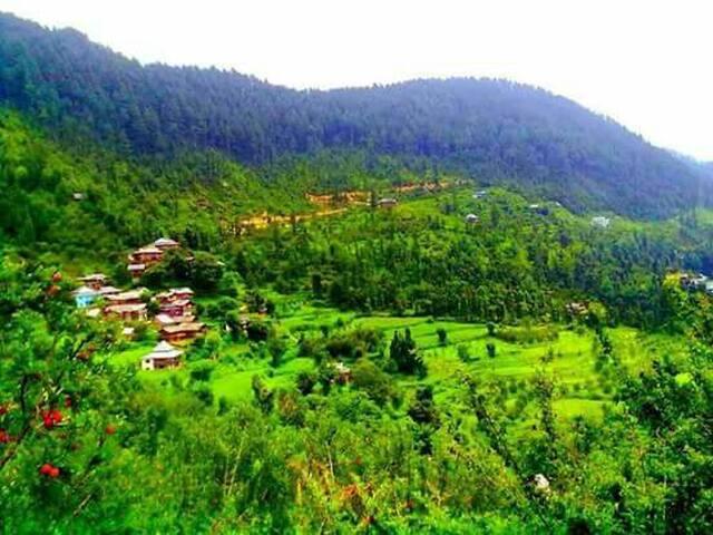 Great Himalayan national park area jibhi  (Bahu)