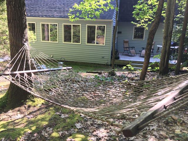 Adirondack Adventure Hub among the Birches