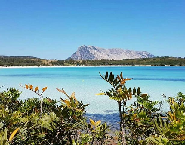Amazing house 10 min from the beach - Olbia - Apartmen