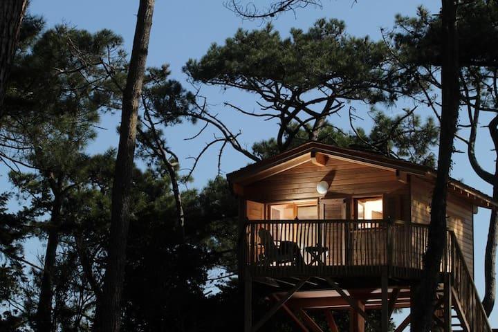 Cabane Tchanquée - Lacanau - Houten huisje