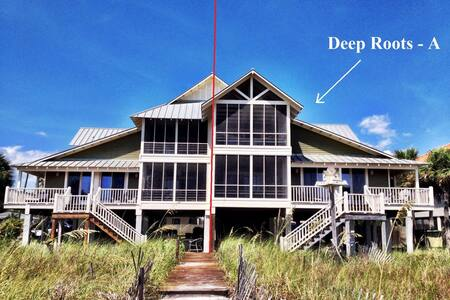Deep Roots A - Mexico Beach