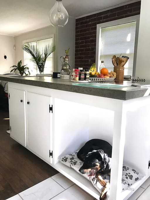 DIY concrete countertops and a custom doggy bed