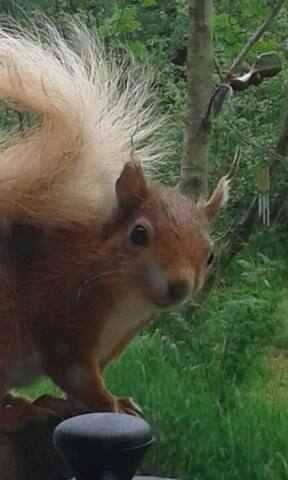 a nosey squirrel