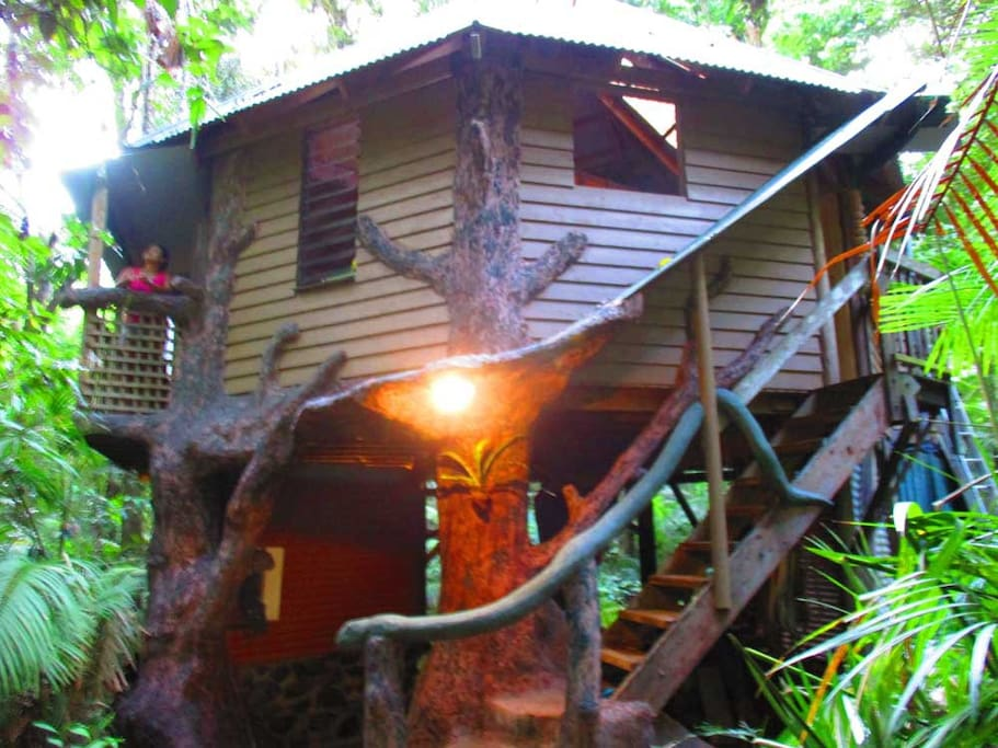 High set design to maximize the rain forest views