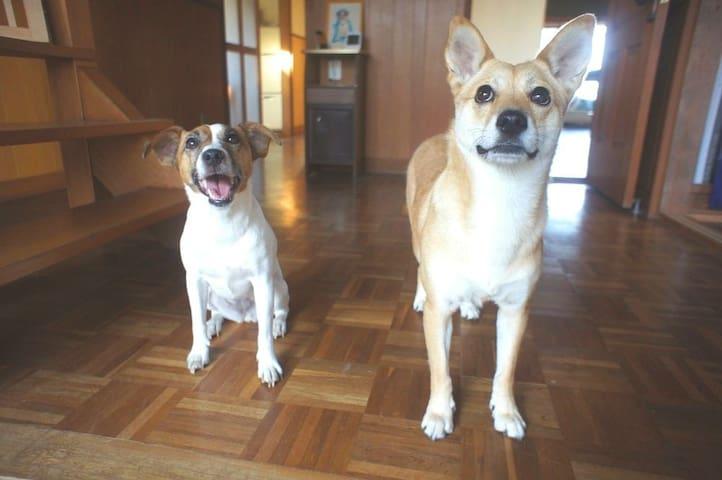 犬と泊まれる石巻民泊「かめハウス」