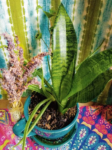 These 4 plants in the house will help you sleep well and wake up rejuvenated. What else will wake you up?
