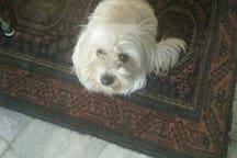 hello, my name is Suzette, I am a kind dog