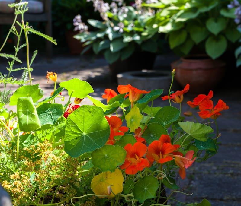 Tuin in de zomer