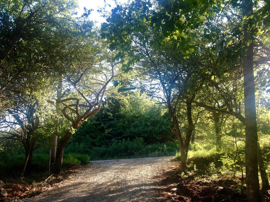 Driveway Entrance (between two apple trees)