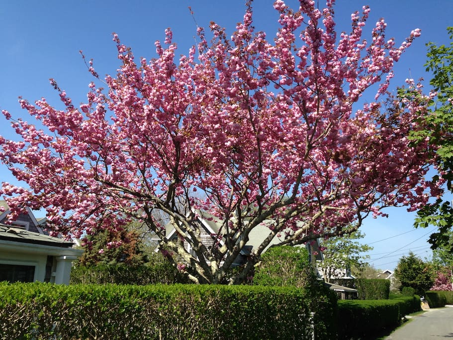 Springtime in Sconset