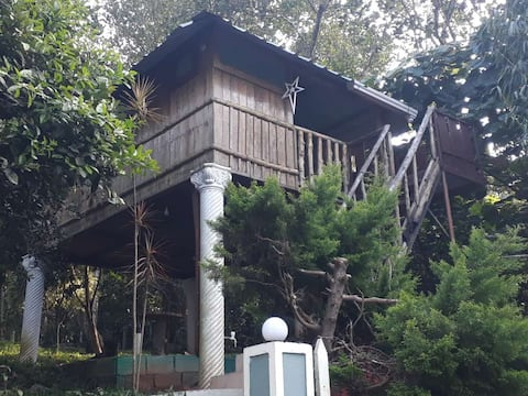 A Jungle Babbler's Tree House - Thekkady