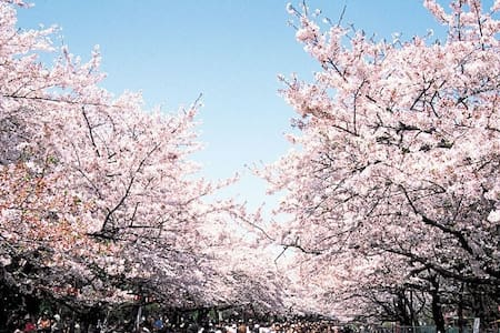【Cherry Blossoms Area】Near Ueno&Asakusa #4M1 - Taitō-ku