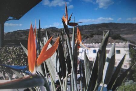 Apartment Rural Algarve - Tavira - Lejlighed