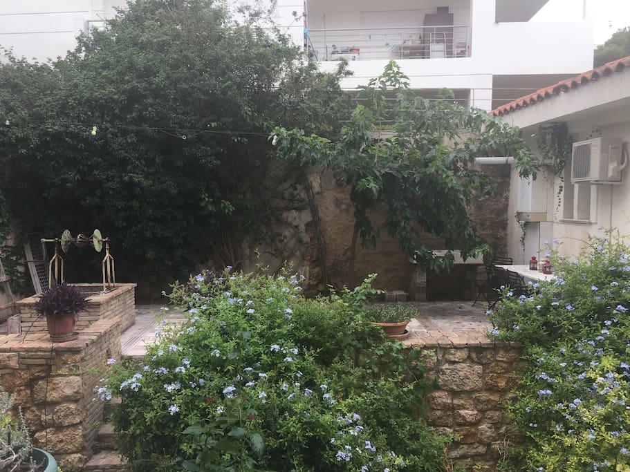 The backyard garden.