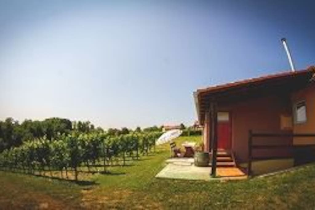 vineyard in yard :)