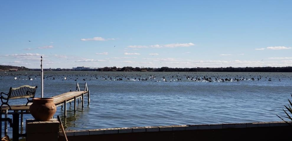SCENIC WATERFRONT NEAR DOWNTOWN/DICKIES ARENA