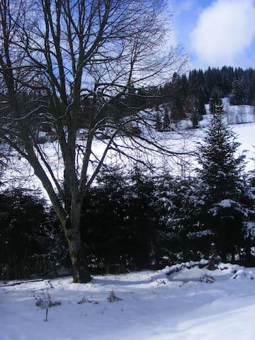 Haus Tannengarten - Eisenbach (Hochschwarzwald) - Lyxvåning