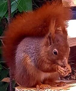 The Gatehouse