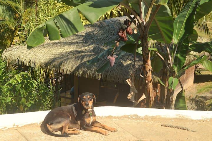 Tropical Chalet - ojochal - Bungalo