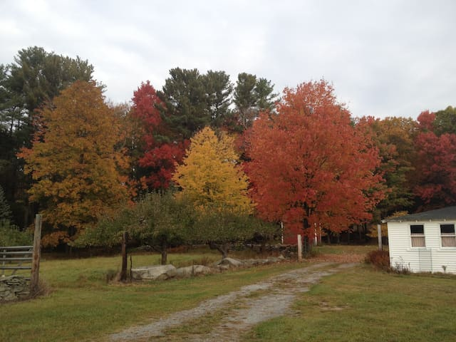 Fall Colors by barn
