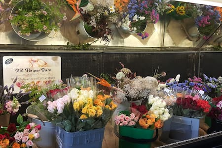 Cut Flower Rose Farm - Kumeu