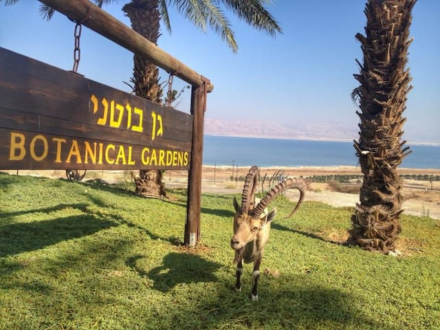 Ein Gedi Camp Lodge - Dead Sea (8)