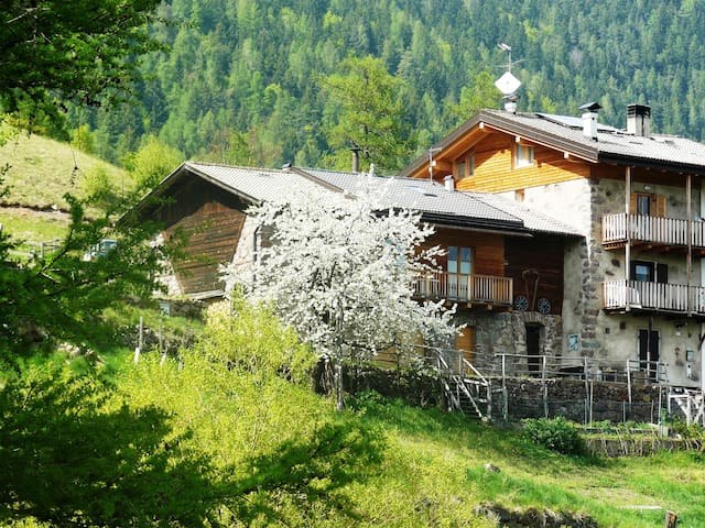 Accogliente casetta in montagna in maso tipico - Sant'Orsola Terme - Haus
