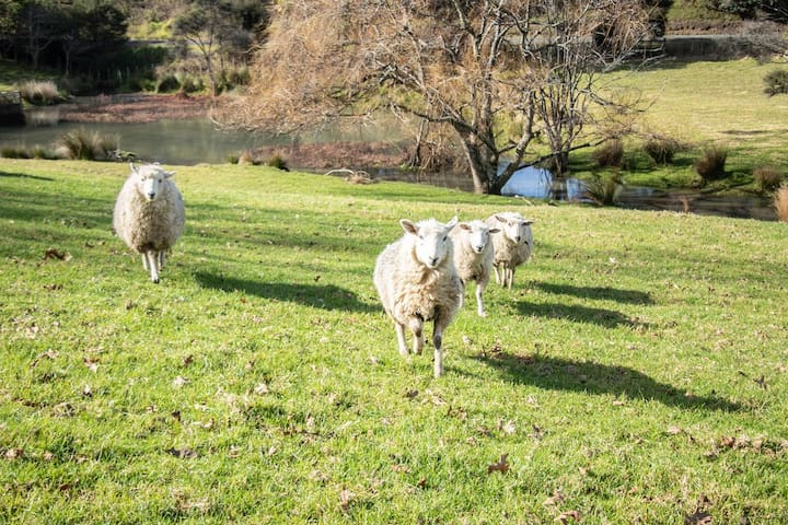 Our Friendly sheep