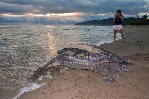 Observación de tortugas marinas en San Blas Panama