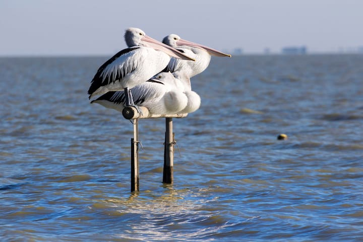 Pelican Perch Retreat