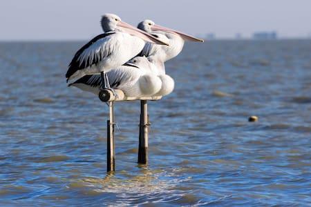 Pelican Perch Retreat