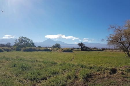 Mountain n'oasis